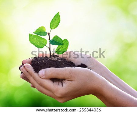 New life in hand - stock photo