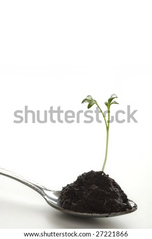 New life sprouting from a spoon of soil - stock photo