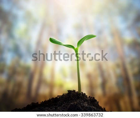 New life. Young sprout in forest, Closeup. - stock photo