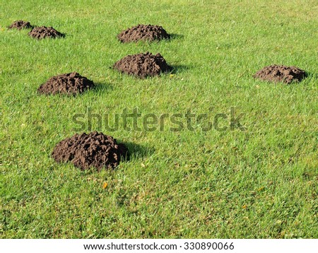 New molehills on lawn made by moles population view on sunny day.       - stock photo