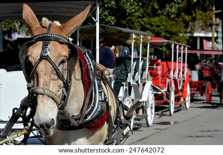NEW ORLEANS, LA-JAN.24: A horse and carriage awaits passengers in front of Jackson Square in the New Orleans French Quarter on January 24, 2015.   - stock photo