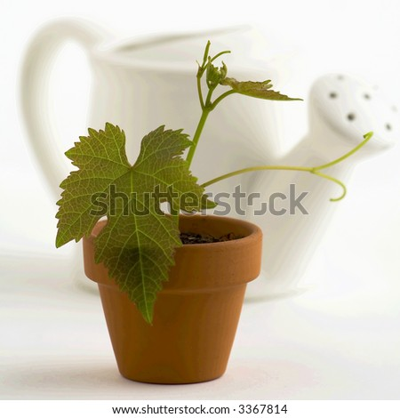 New plant and watering-can on white background. Selective focus. - stock photo