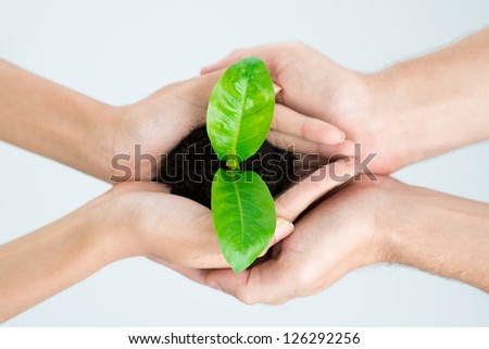 New plant in people�¢??s hands - stock photo