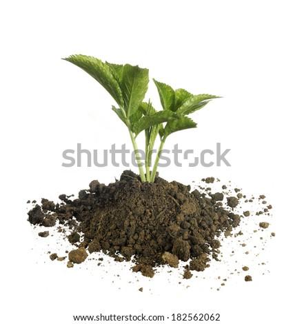new plant isolated - stock photo