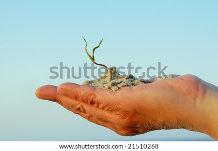 new plant on man hand on sky background - stock photo