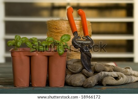 New plants are ready to plant in the garden. - stock photo