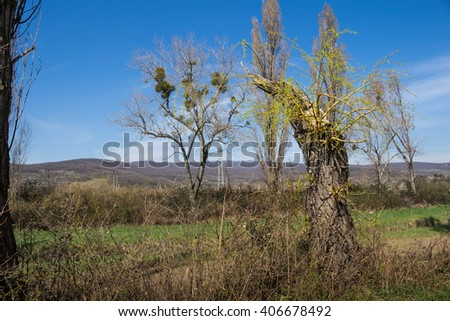 New power of the nature in the spring Trunk of a broken old tree, with a new branches in the early spring. Line of the mountains Karpaty on the horizon.  - stock photo