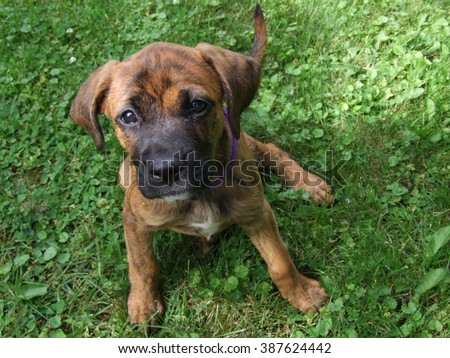 New Puppy - stock photo