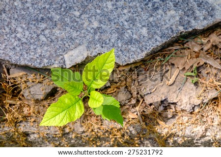 New sprout, concept of business break through, top view - stock photo
