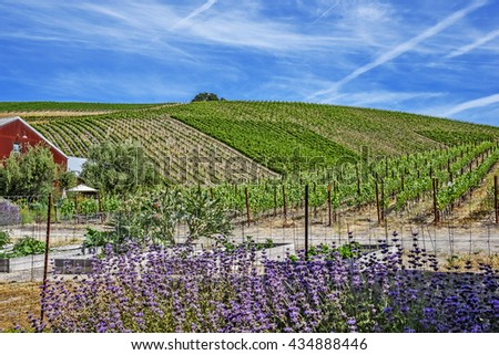 New winery converted from old farm house on the scenic hills of the California Central Coast where vineyards grow a variety of fine grapes for wine production, near Paso Robles, CA. scenic Highway 46. - stock photo