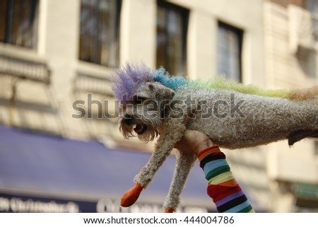 NEW YORK CITY - JUNE 26 2016: The 46th annual NYC Pride March featured over 350 contingents, marching from 36th Street to Christopher & Greenwich Sts. Dog in rainbow costume - stock photo