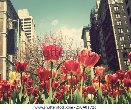 New York City Spring  - stock photo