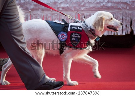 NEW YORK - NOV 11, 2014: A disabled veteran service dog walks on the red carpet in the 2014 America's Parade held on Veterans Day in New York City on November 11, 2014. - stock photo