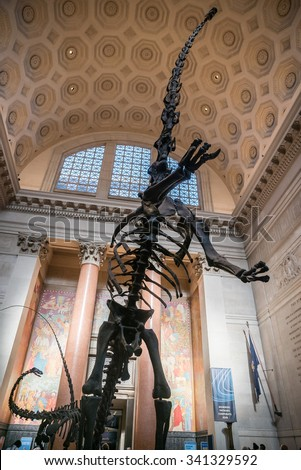 NEW YORK - NOV 17, 2015: Brachiosaurus skeleton fossils in dinosaur room in lobby of American Museum of Natural History in NYC. AMNH is a famous museum in Manhattan, NYC, USA. - stock photo