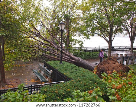 NEW YORK - OCT 30: A fallen tree blocks the Battery Park City promenade October 30, 2012 in Lower Manhattan, New York City, NY. Superstorm Sandy shut down much of the city. - stock photo