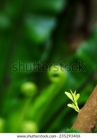 new young light green leaves growing blooming on the tropical trees after rainy week under bright natural sunlight in jungle with natural bokeh background - stock photo