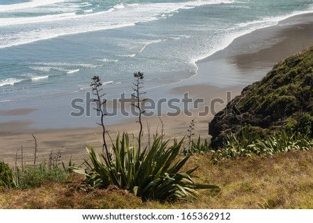 New Zealand flax growing on coastal cliffs - stock photo