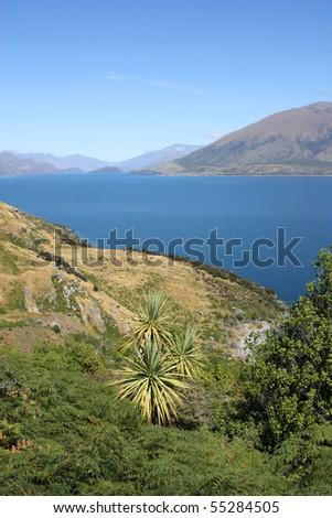 New Zealand - Lake Hawea in Otago district. Cabbage tree palm plant. - stock photo