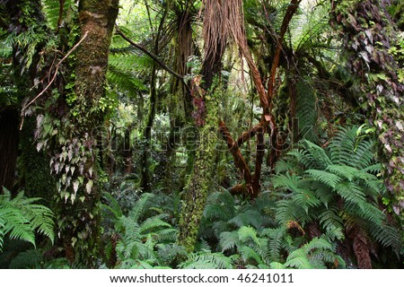 New Zealand. Lush temperate rainforest in Catlins Forest Park of Otago region. Green forest, natural landscape. - stock photo