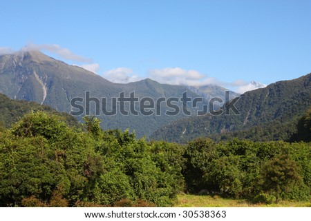 New Zealand native bush forest in Westland Tai Poutini National Park. - stock photo