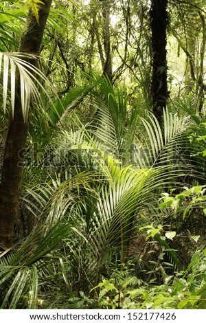 New Zealand tropical jungle forest - stock photo