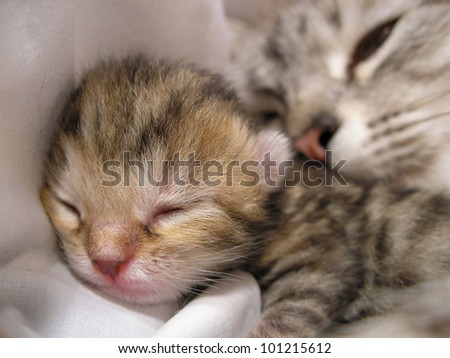 Newborn kitten and mother cat - stock photo