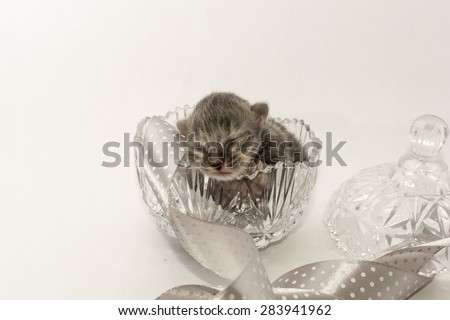 Newborn kitten in a cristal bowl - stock photo