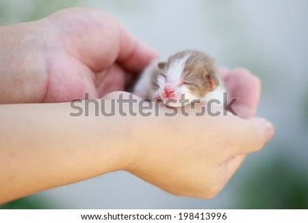 Newborn little kitten on the hand - stock photo