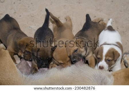 Newborn puppies drinking milk from their mother dog. - stock photo