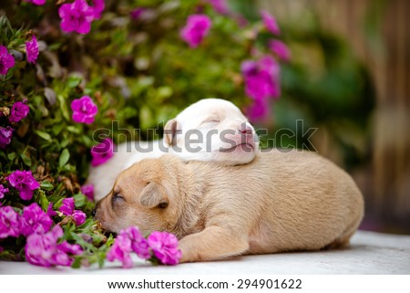 newborn puppies with flowers