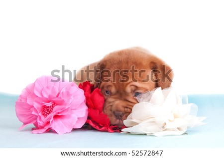 newborn puppy lying among some artificial flowers - stock photo