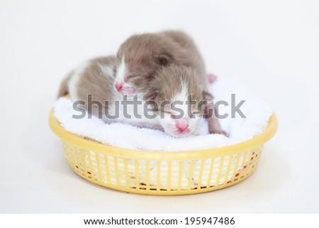 Newborn sleeping baby cat on isolated - stock photo