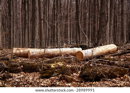 Newly cut down trees in a forest