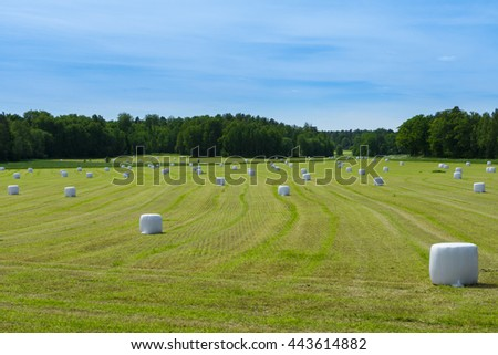 Newly harvested large hay field with bales of hay or ensilage spread all over.