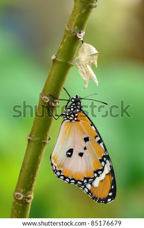 newly transformed butterfly - stock photo