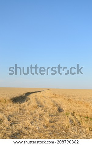 Next car on the wheat field, the beginning of the harvest  - stock photo
