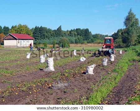 NICA, LATVIA - AUGUST 29, 2015: Farmers are harvesting potatoes with tractor powered two furrow potato digger with shaking chains.        - stock photo