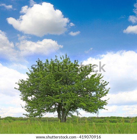 nice alone tree on green meadow under nice sky - stock photo