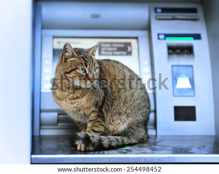 Nice and big cat sits on bank ATM. No money. It is out of cashs. SWIFT system - stock photo