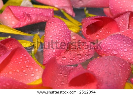 nice and fresh pink rose petal background