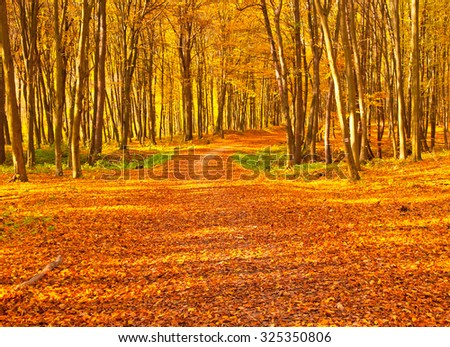 Nice autumnal scene in the forest - stock photo