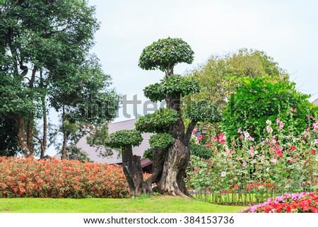 Nice bonsai in the garden of a house - stock photo