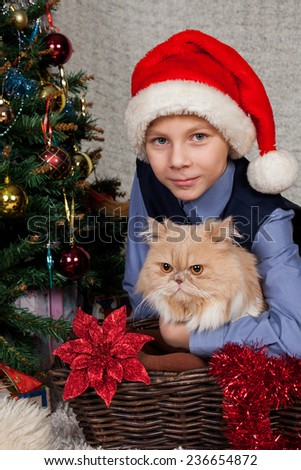 nice boy with a beautiful Persian cat at a New Year tree  - stock photo