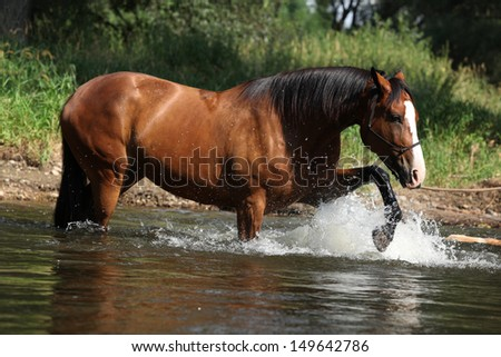 Nice brown horse with rope halter playing in the water