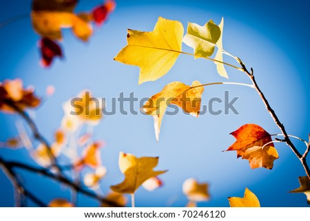 nice colorful leafs on the beautiful blue sky - stock photo