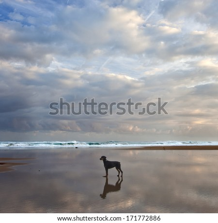 NIce dog on beach - stock photo