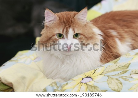 Nice domestic red cat at rest on bed - stock photo