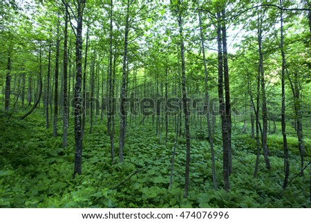 Nice forest from black sea.