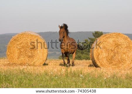 Nice horse running - stock photo