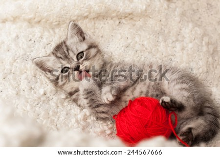 nice kitten plays with threads